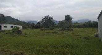 Palenque Palotal / 800 m2 / Terreno en Venta (20-319)